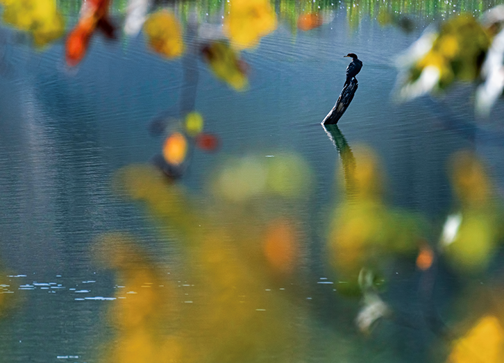 Bird on a branch in the river